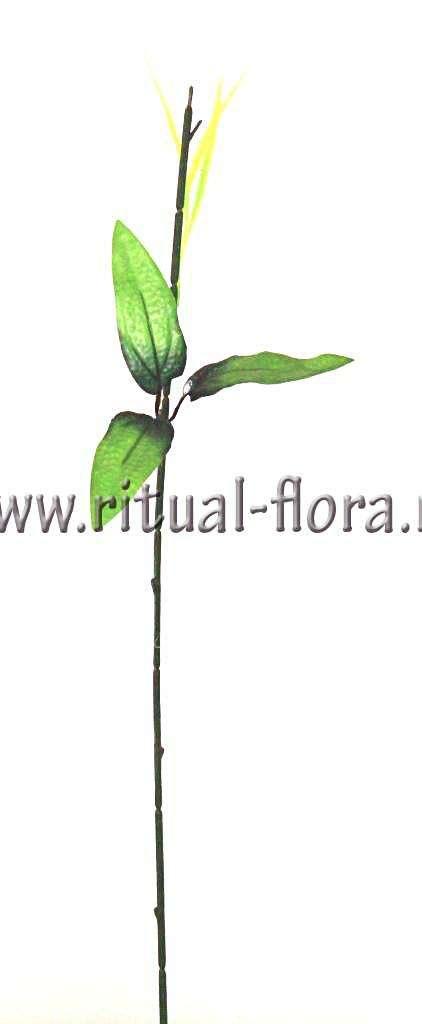 Ножка хризантемы №32