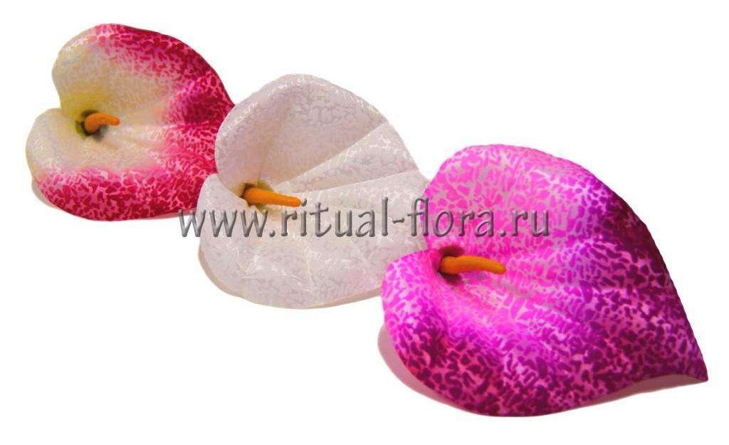 Калла мраморная LZY-19 белая (1/100)