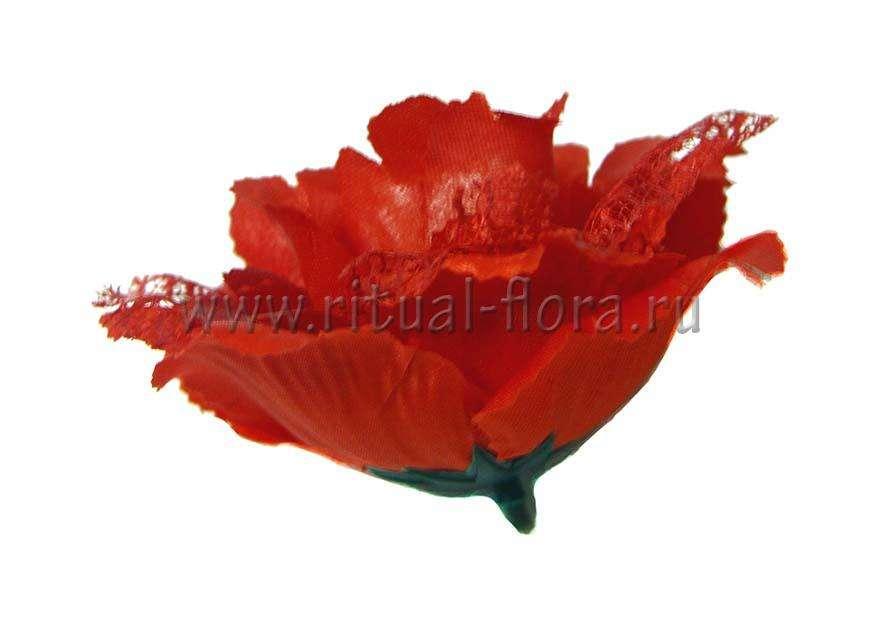 Роза Мадлен FL-8 (1/50)