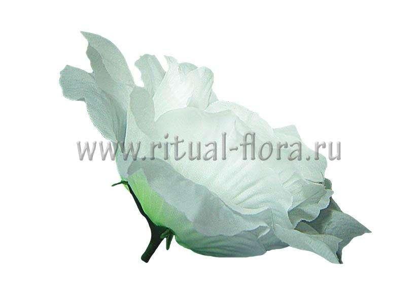 Роза Прелесть Г0337 белая (1/40)