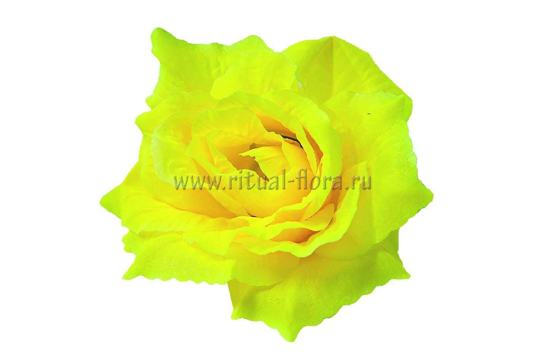 Роза Прелесть Г0337 бордовая (1/40)