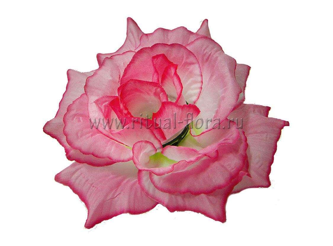 Роза Прелесть Г0337 розовая (1/40)