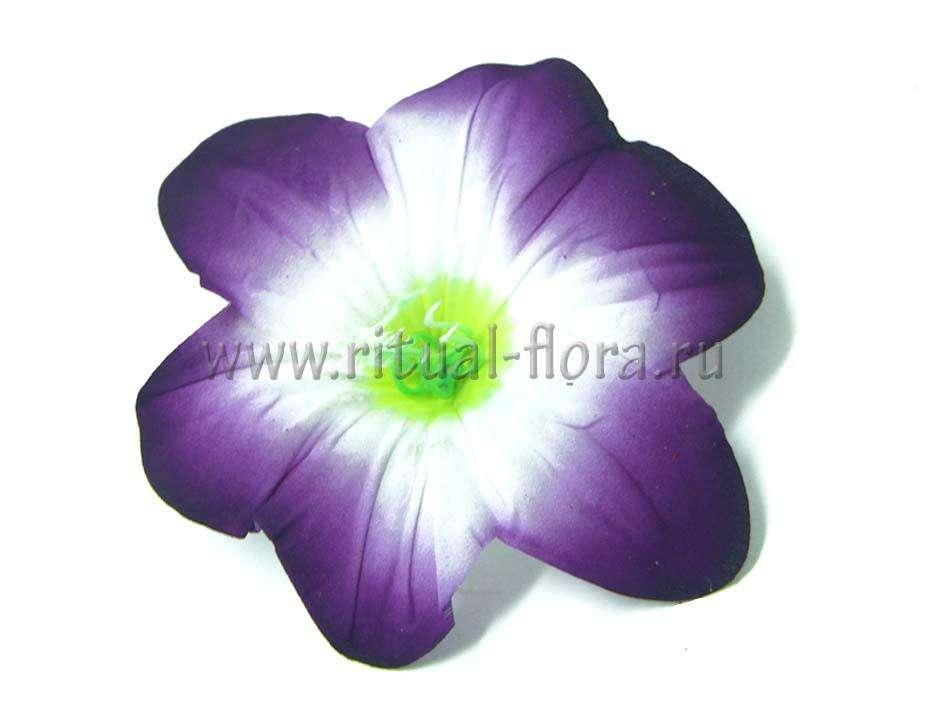 Лилия бархат Г0107 фиолетовая (100 шт)