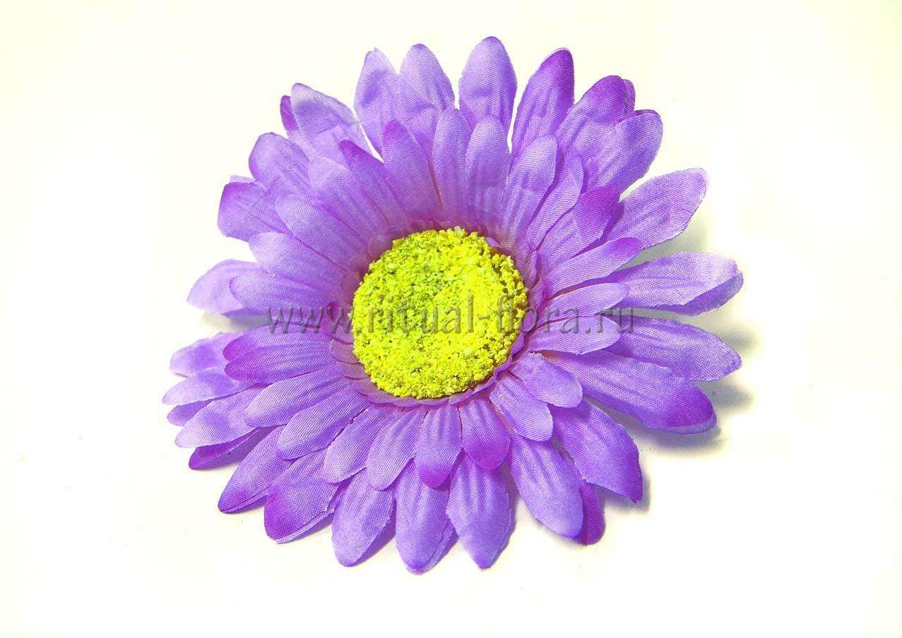 Ромашка махровая Г0407 фиолетовая (20 шт)