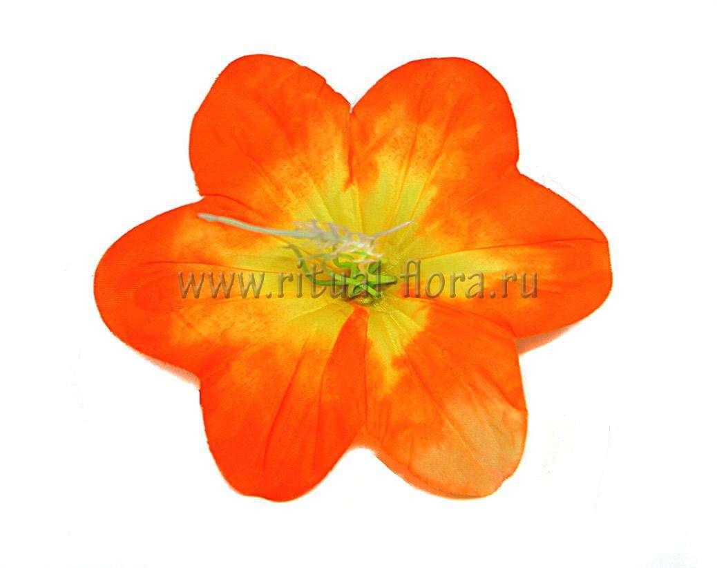 Клематис большой оранжевый (1/100)