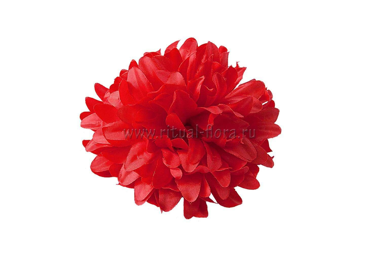 Хризантема кудрявая красная 16см. (1/20)