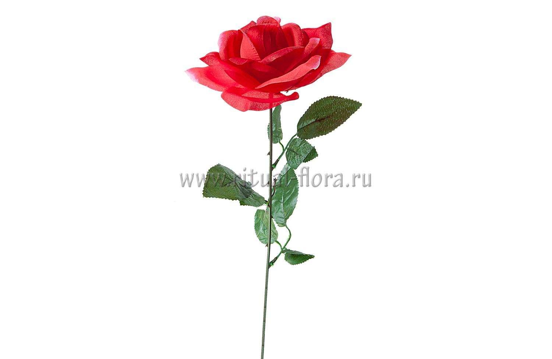 Ветка розы