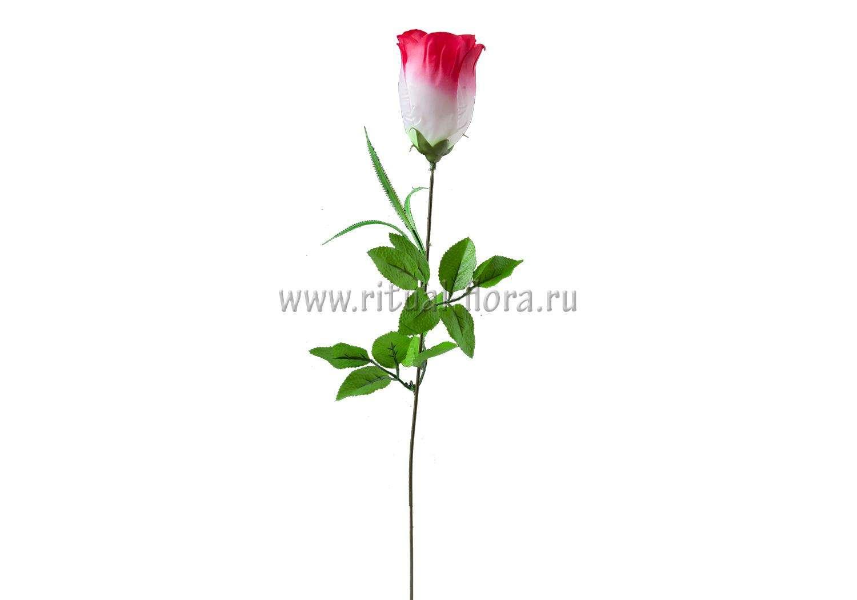 Ветка розы бутон