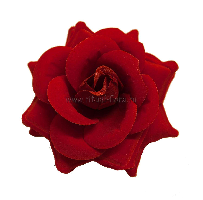 roza-barhat-emma-d-12-sm-