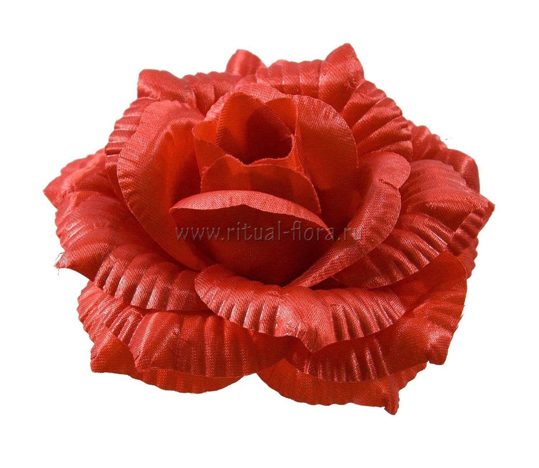 roza-katrin-atlas-d-14-sm-krasnyy