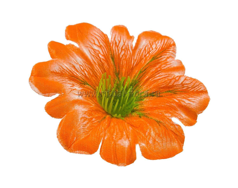klematis-atlas-d-11-sm-oranjevyy