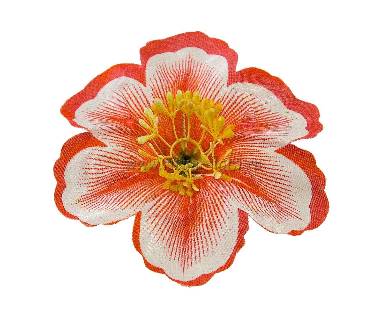 Клематис атлас d-12 см. оранжевый(1/100)