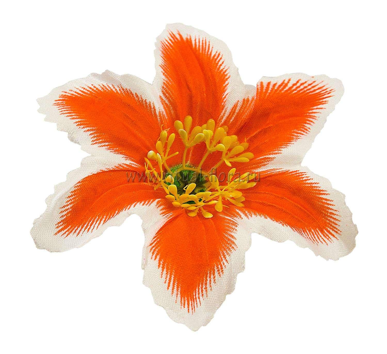 Лилия атлас d-13 см. оранжевая