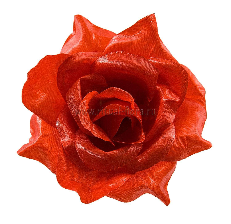 roza-sanni-atlas-d-22-sm-krasnyy