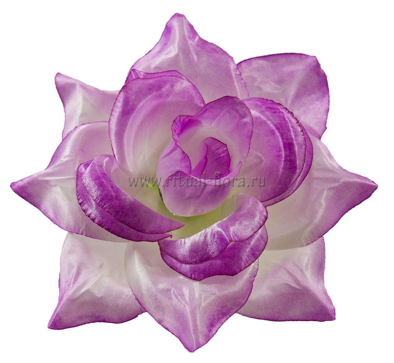 roza-sanni-atlas-d-22-sm-fioletovyy
