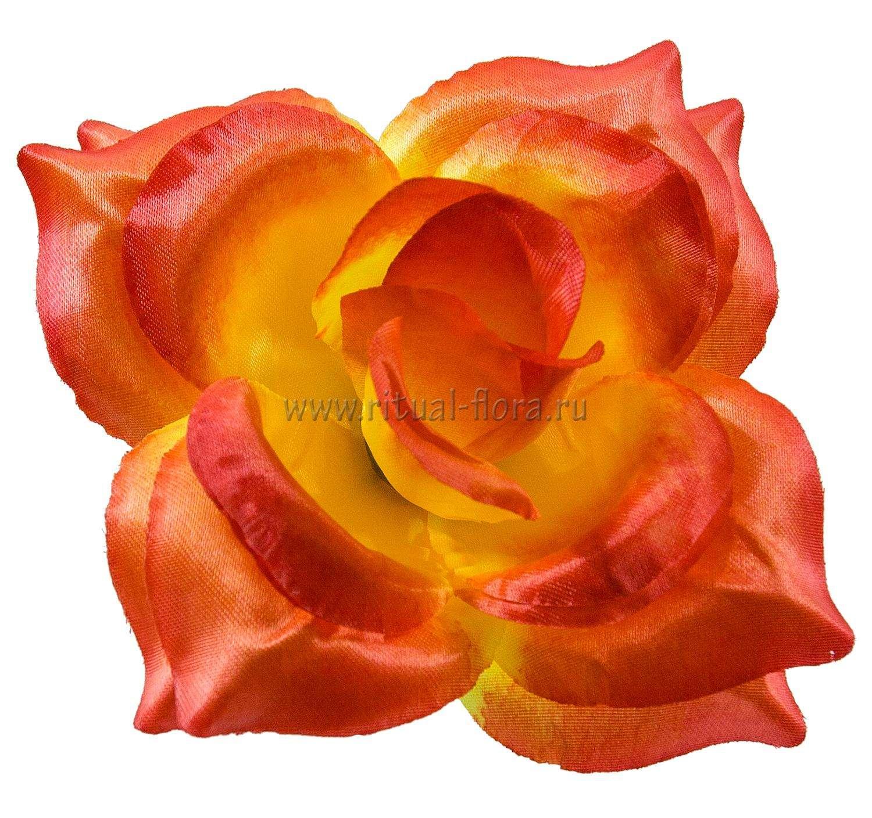 roza-mariya-atlas-d-165-sm-oranjevyy