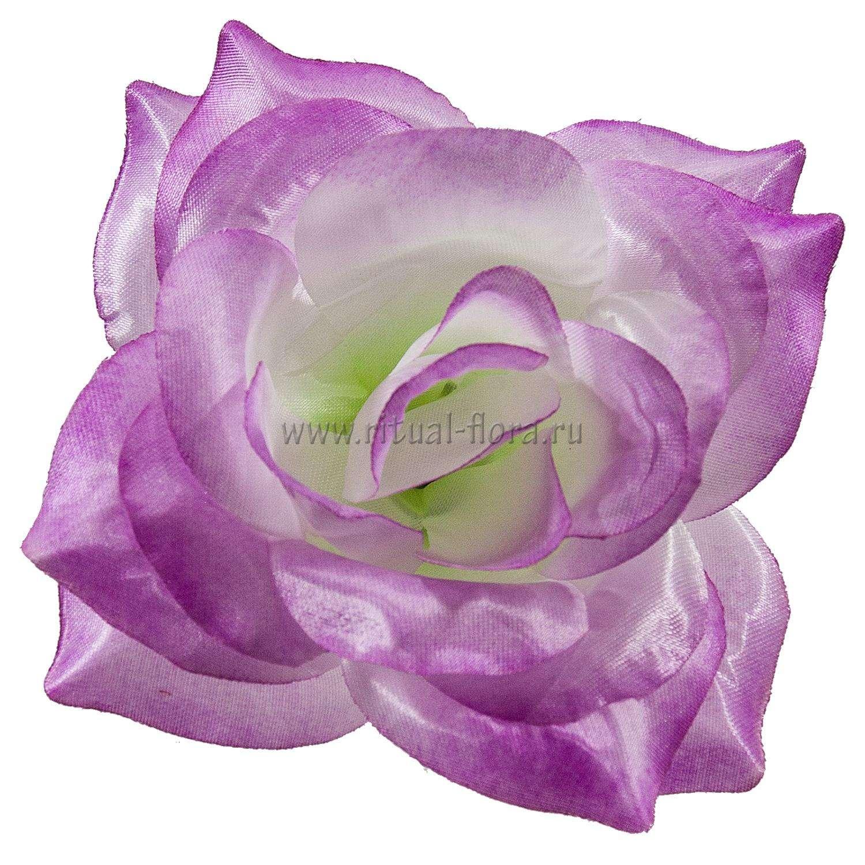 roza-mariya-atlas-d-165-sm-fioletovyy