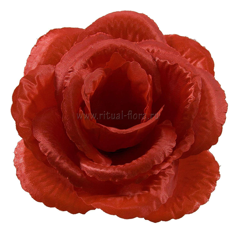 roza-helga-atlas-d-15-sm-1-20-krasnyy