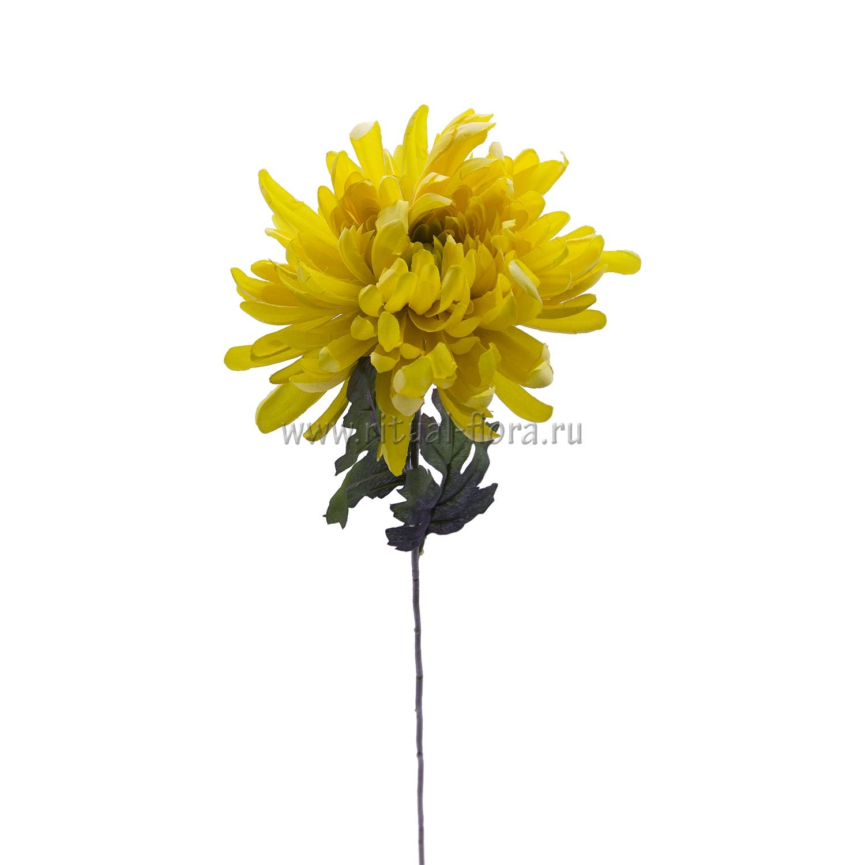 Ветка хризантема остролист. ВХН-3